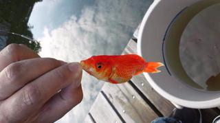 金魚釣り対決
